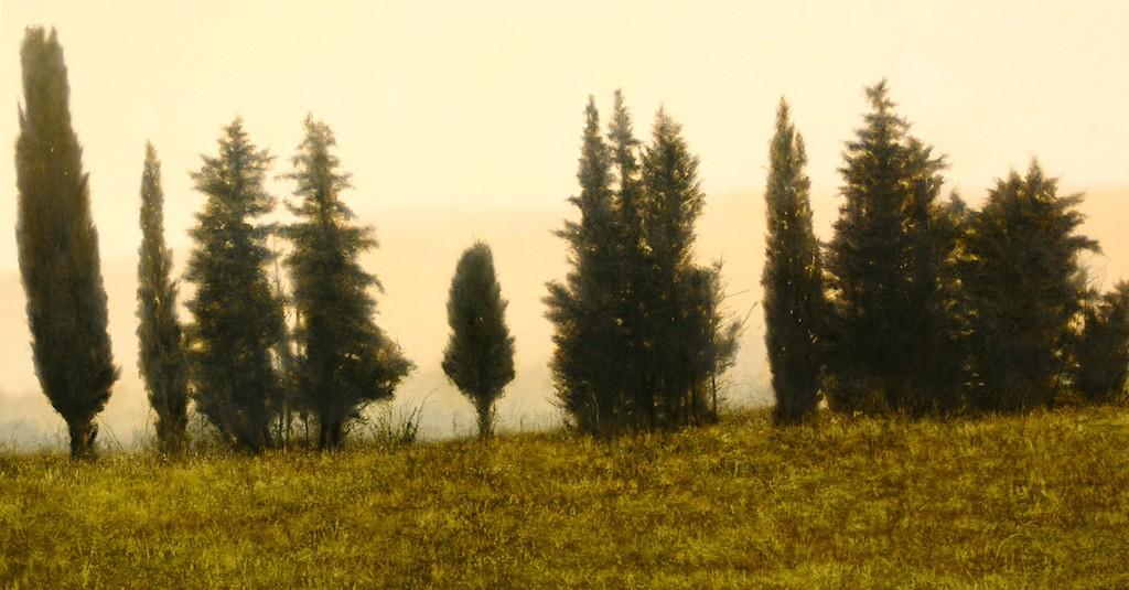 thomas darnell cypress