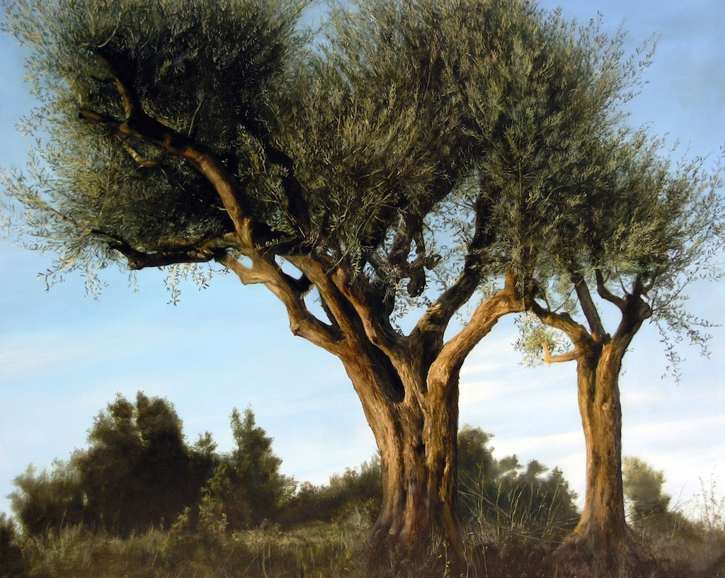 thomas darnell olive trees