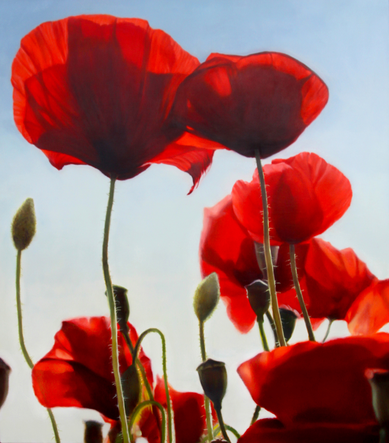 Images Of Poppy Flower Paintings