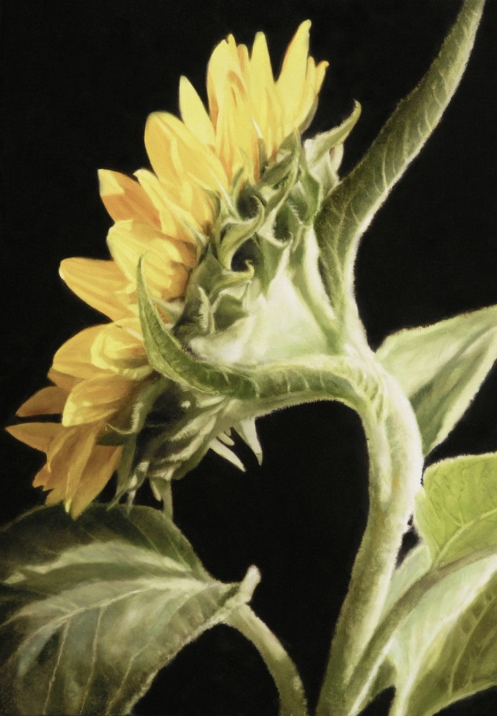 thomas darnell sunflower profile 121x91cm